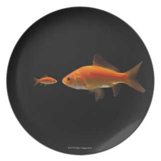 Goldfish 3 plate