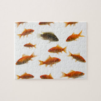 Goldfish 3 puzzle