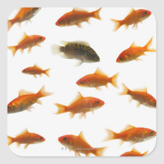 Goldfish 3 square sticker