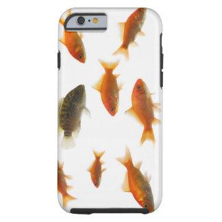 Goldfish 3 tough iPhone 6 case