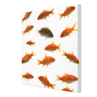 Goldfish 4 canvas print
