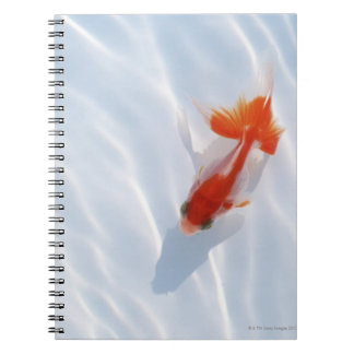 Goldfish 5 spiral notebooks