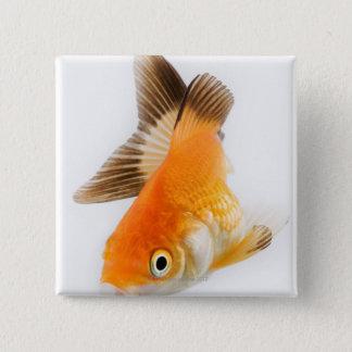 Goldfish (Carassius auratus) 15 Cm Square Badge