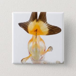 Goldfish (Carassius auratus) 2 15 Cm Square Badge