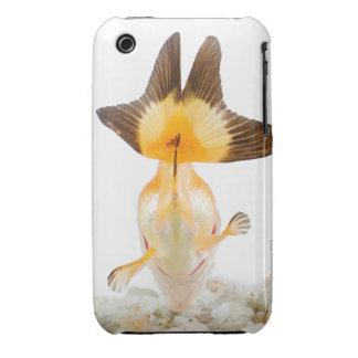 Goldfish (Carassius auratus) 2 iPhone 3 Cover
