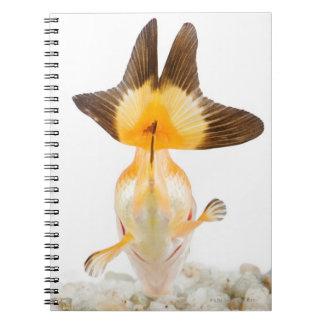 Goldfish (Carassius auratus) 2 Notebook