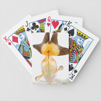 Goldfish (Carassius auratus) 2 Poker Deck