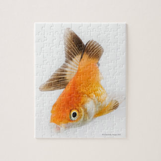 Goldfish (Carassius auratus) Jigsaw Puzzle