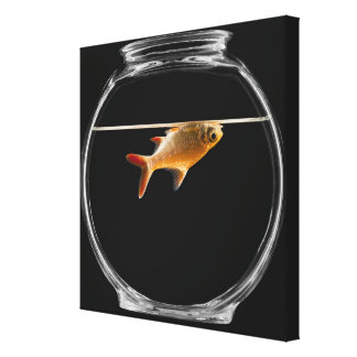 Goldfish in bowl 2 canvas print