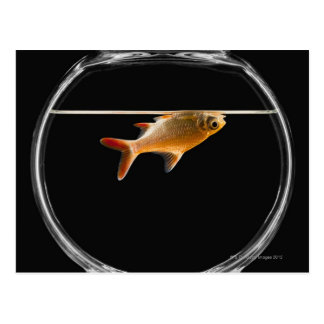 Goldfish in bowl 2 postcard