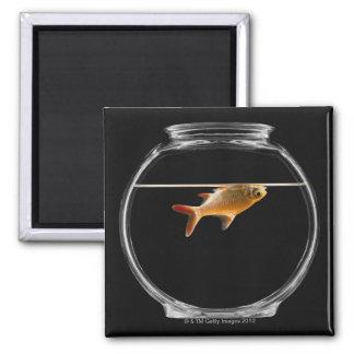 Goldfish in bowl 2 square magnet