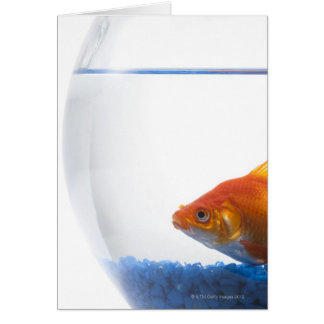 Goldfish in bowl on white background greeting card