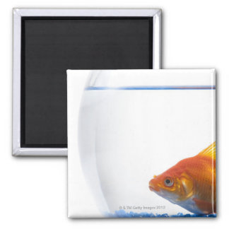 Goldfish in bowl on white background square magnet