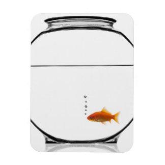 Goldfish in bowl rectangular photo magnet
