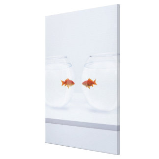 Goldfish in separate fishbowls looking face to fac canvas print