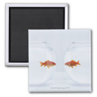 Goldfish in separate fishbowls looking face to magnet