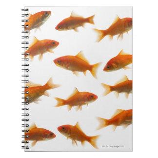 Goldfish Notebooks