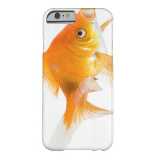Goldfish on white background barely there iPhone 6 case