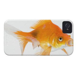 Goldfish on white background iPhone 4 Case-Mate case