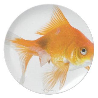 Goldfish on white background plate