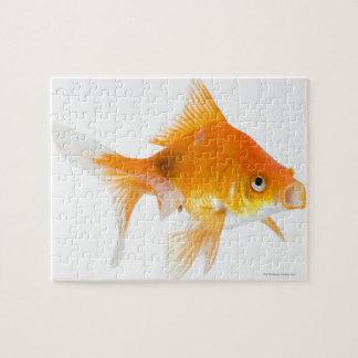 Goldfish on white background puzzles