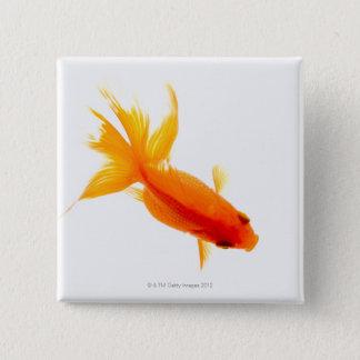 Goldfish, overhead view 15 cm square badge