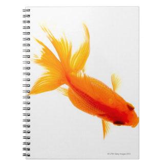 Goldfish, overhead view notebook
