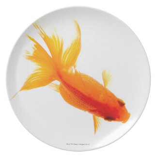 Goldfish, overhead view plate