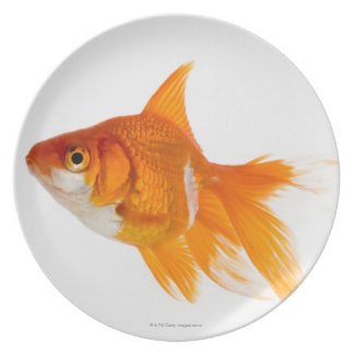 Goldfish, side view plate