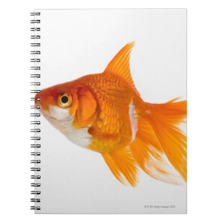 Goldfish, side view spiral notebooks