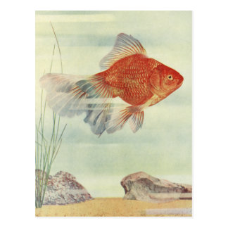 Goldfish T-Shirts, Cards & Gifts! Postcard