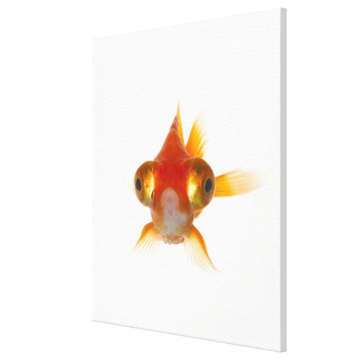 Goldfish with Big eyes 2 Canvas Print