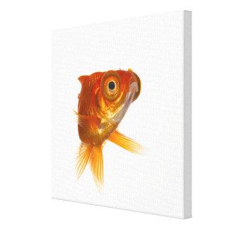 Goldfish with Big eyes 3 Canvas Print