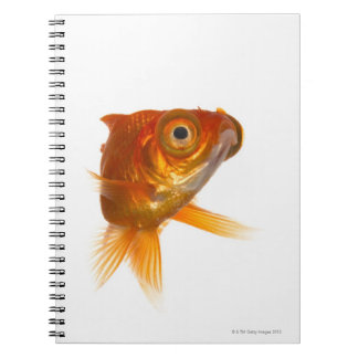 Goldfish with Big eyes 3 Note Book