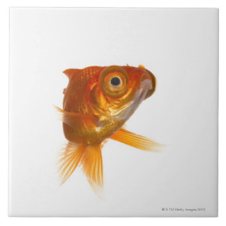 Goldfish with Big eyes 3 Ceramic Tiles