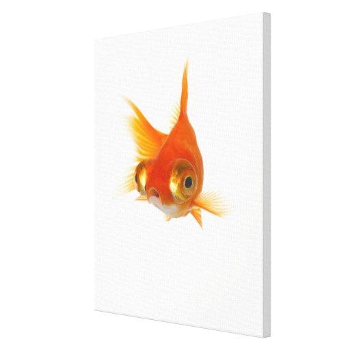 Goldfish with Big eyes Canvas Prints