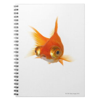 Goldfish with Big eyes Spiral Notebooks