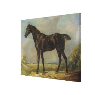 Golding Constable's Black Riding-Horse, c.1805-10 Canvas Print