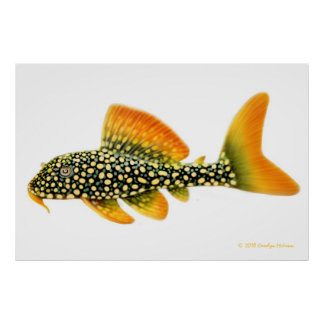 Goldy Pleco Fish Print