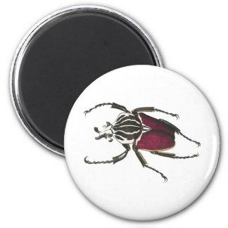 Goliath Beetle 6 Cm Round Magnet