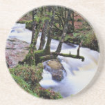Golitha Falls, Cornwall, England  flowers Coasters