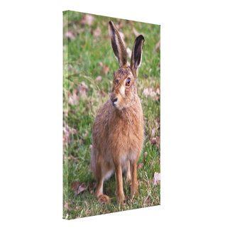 Good Hare Day Wrapped Canvas