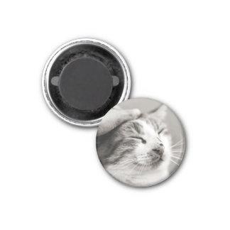 Good kitty! magnet
