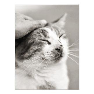 Good Kitty! - Photo print