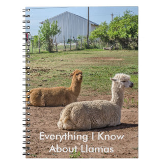 Good Looking Llamas (lama glama) Notebook