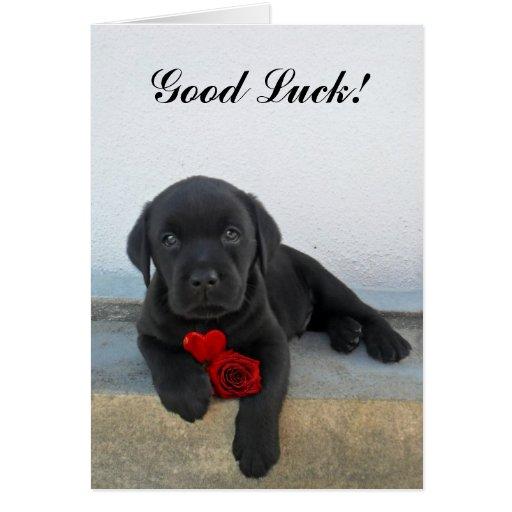 Good Luck Labrador Puppy Greeting Cards
