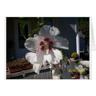 Good Morning Flower Greeting Cards