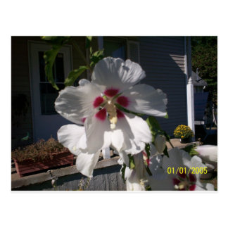 Good Morning Flower Postcard