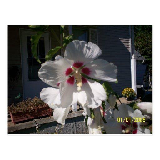 Good Morning Flower Post Cards