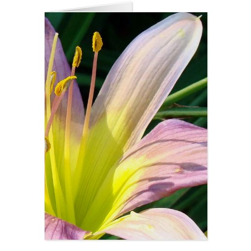 Good morning Lily!  Notecard Cards